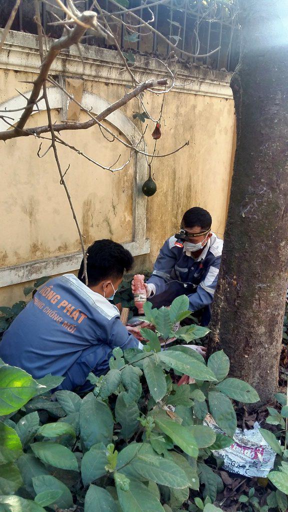 Diệt mối cây trồng với quy trình diệt mối sinh học