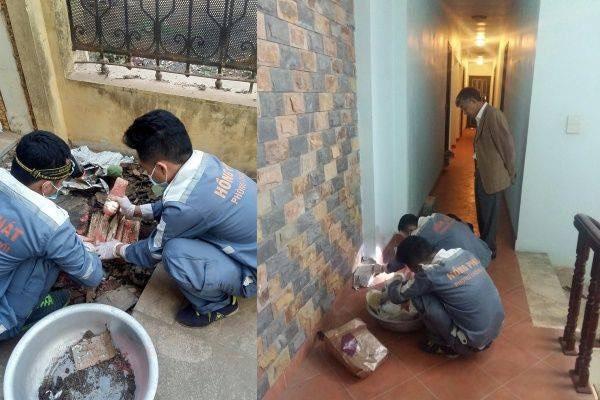 Diệt Mối Tận Gốc Tại Hà Nội, Diệt Sạch Mối Chúa Với Quy Trình Diệt Mối Sinh Học.