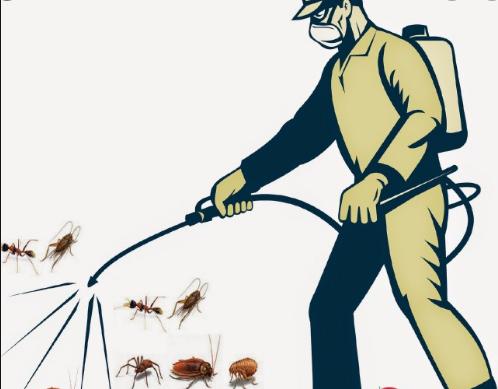 Diệt côn trùng tại nhà ở Hà Nội