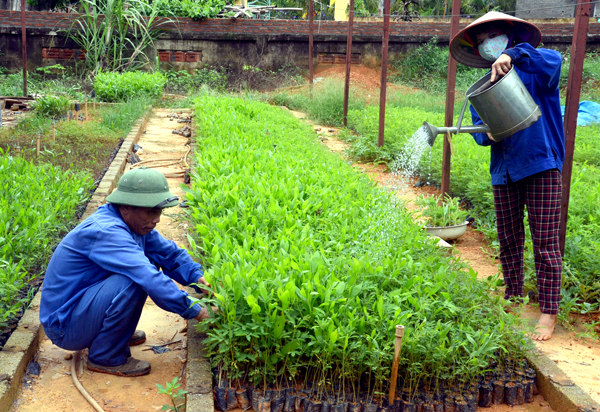 Phương pháp diệt mối hại cây trồng hiệu quả