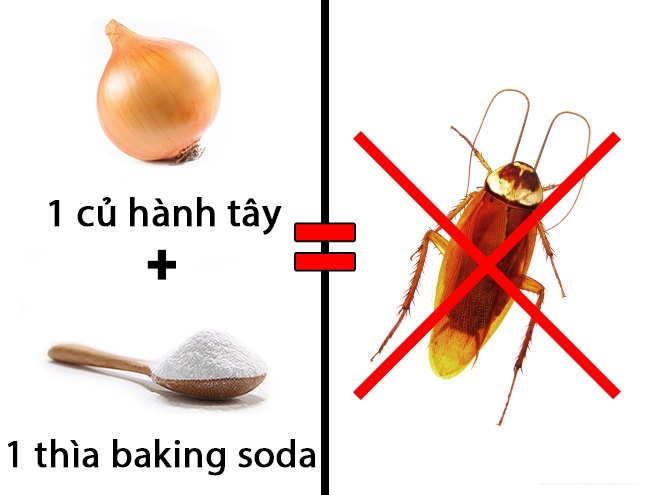 3 cách diệt côn trùng đơn giản tại nhà