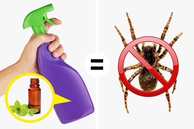 10 cách diệt côn trùng trong phòng ngủ hiệu quả không dùng hoá chất